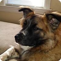 Adopt A Pet :: Swisher - Willingboro, NJ