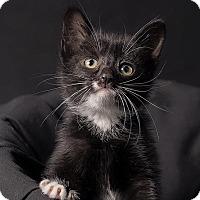 Adopt A Pet :: Leontyne - Chicago, IL