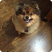 Adopt A Pet :: SISSY *adoption pending!* - Nampa, ID