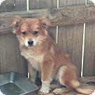 Adopt A Pet :: Foxie