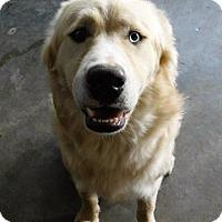 Adopt A Pet :: Toby - Aurora, CO