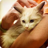 Adopt A Pet :: Dell - Dallas, TX