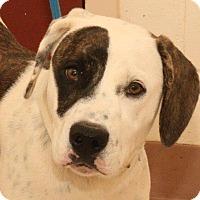Adopt A Pet :: Shalimar - McDonough, GA