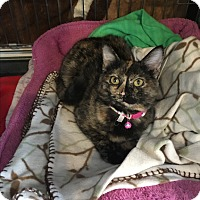 Adopt A Pet :: Jessie - NO ADOPTION FEE - Scottsdale, AZ