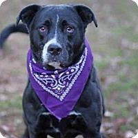 Adopt A Pet :: PANDA - Tallahassee, FL
