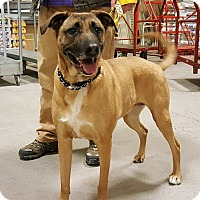 Adopt A Pet :: Gertie - Foster Needed ASAP - Detroit, MI
