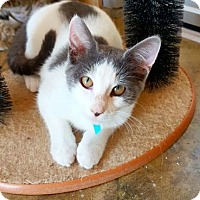 Adopt A Pet :: Dottie - Fredericksburg, TX