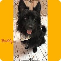 Adopt A Pet :: Buddy - Philadelphia, PA