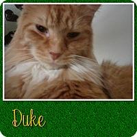 Adopt A Pet :: Duke - Cedar Springs, MI