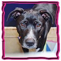 Adopt A Pet :: Chikis - San Jacinto, CA