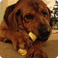 Adopt A Pet :: Frank - Morgantown, WV