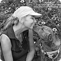 Adopt A Pet :: Autumn - Eustis, FL
