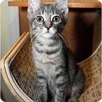 Adopt A Pet :: Tigra - Farmingdale, NY