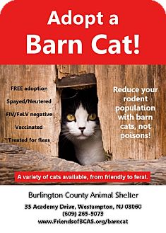 Domestic Shorthair Cat for adoption in Westampton, New Jersey - BARN CATS! OUTDOOR CATS!