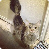 Adopt A Pet :: Gemma - Bentonville, AR