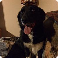 Adopt A Pet :: TODD - San Pedro, CA