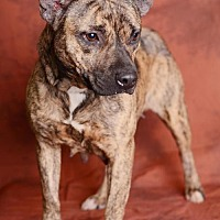 Adopt A Pet :: Maude - In Foster Home - Marrero, LA