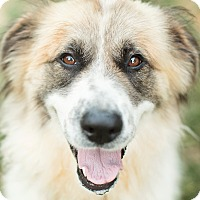 Adopt A Pet :: Layla Adopted - Tulsa, OK
