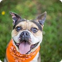 Adopt A Pet :: Fresno - Portland, OR