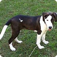 Adopt A Pet :: Tawney - New Oxford, PA