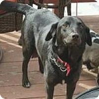 Adopt A Pet :: Iris - Georgetown, CO
