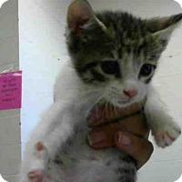 Adopt A Pet :: A271487 - Conroe, TX