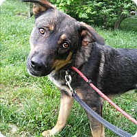 Adopt A Pet :: Shiloh - Louisville, KY