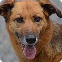 Adopt A Pet :: Marley - Sudbury, MA