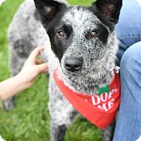 Adopt A Pet :: Laramie - Aurora, IL