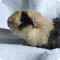 Adopt A Pet :: Alfee - Edmonton, AB