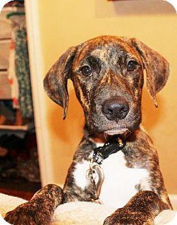 Hound (Unknown Type) Mix Puppy for adoption in Alpharetta, Georgia - Durin