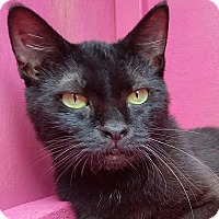 Adopt A Pet :: AVIA - Ocala, FL