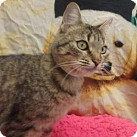 Adopt A Pet :: Tabbie #158719 - Apple Valley, CA
