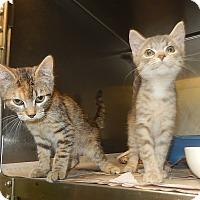 Adopt A Pet :: Tina and Sheeba - Newport, NC