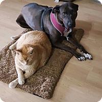 Adopt A Pet :: Helen - Surprise, AZ