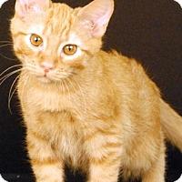 Adopt A Pet :: Penne - Newland, NC