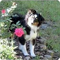 Adopt A Pet :: Della - Orlando, FL