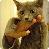 Adopt A Pet :: Ariel - Davis, CA