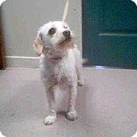 Adopt A Pet :: Paloma - Milan, NY
