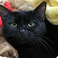 Adopt A Pet :: Starboard - Alexandria, VA