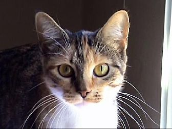 Cats For Adoption In Tyler Tx