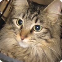 Adopt A Pet :: Miss Kitty - Dallas, TX