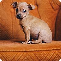 Adopt A Pet :: Thurston - Portland, OR