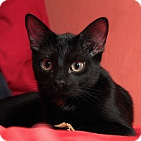 Adopt A Pet :: Freddie - St. Louis, MO