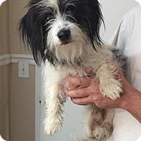 Adopt A Pet :: 4336 - Calhoun, GA