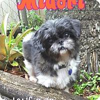 Adopt A Pet :: Midori - Wellington, FL