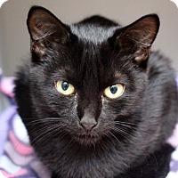 Adopt A Pet :: Priscilla - Sarasota, FL