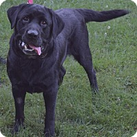 Adopt A Pet :: Rosco - Island Lake, IL