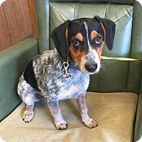 Adopt A Pet :: # 2 STRAY Avail.9/2 - Carrollton, OH