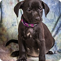Adopt A Pet :: HALSEY - Anna, IL